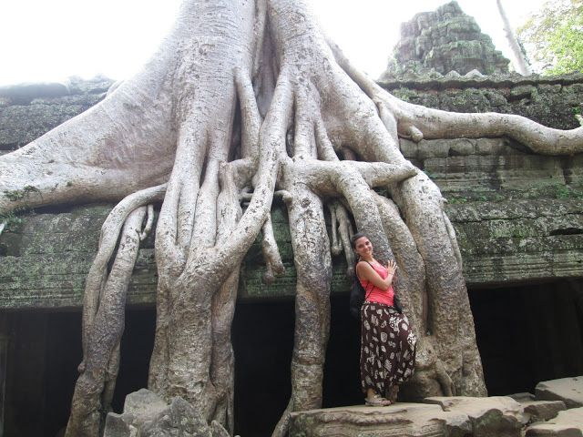 Raíces en Ta Prohm en Angkor, Camboya