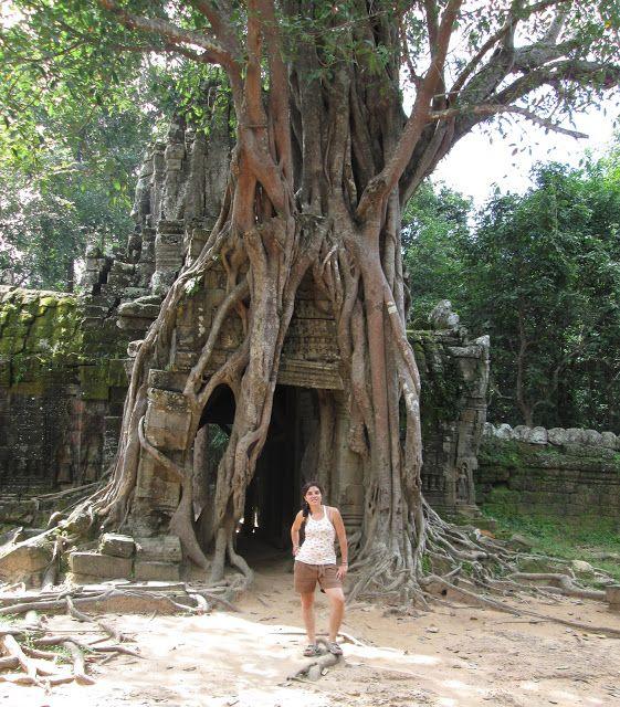 Raíces de Ta Som en Camboya