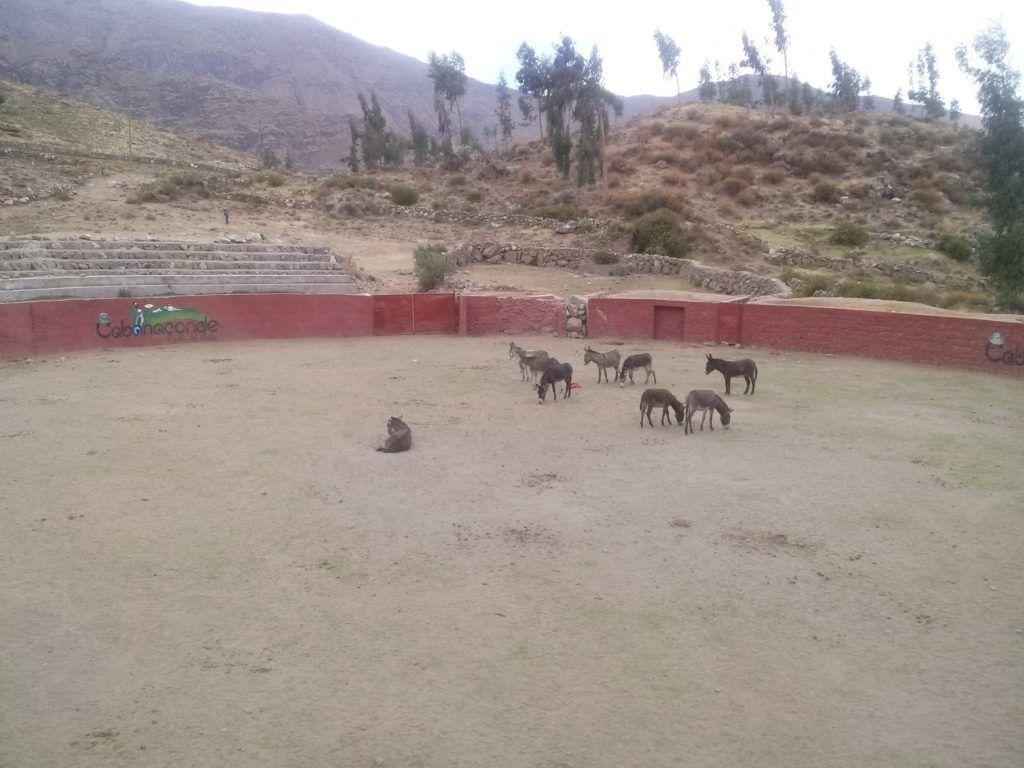 Antigua plaza de toros ahora convertida en cuadra de burros
