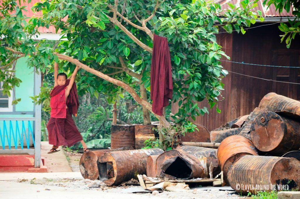 Monje novicio birmano jugando en un árbol en Kalaw