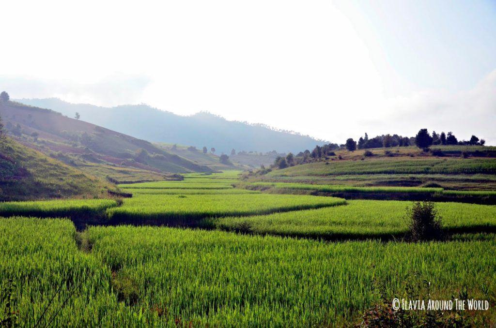 Campos de arroz en Myanmar