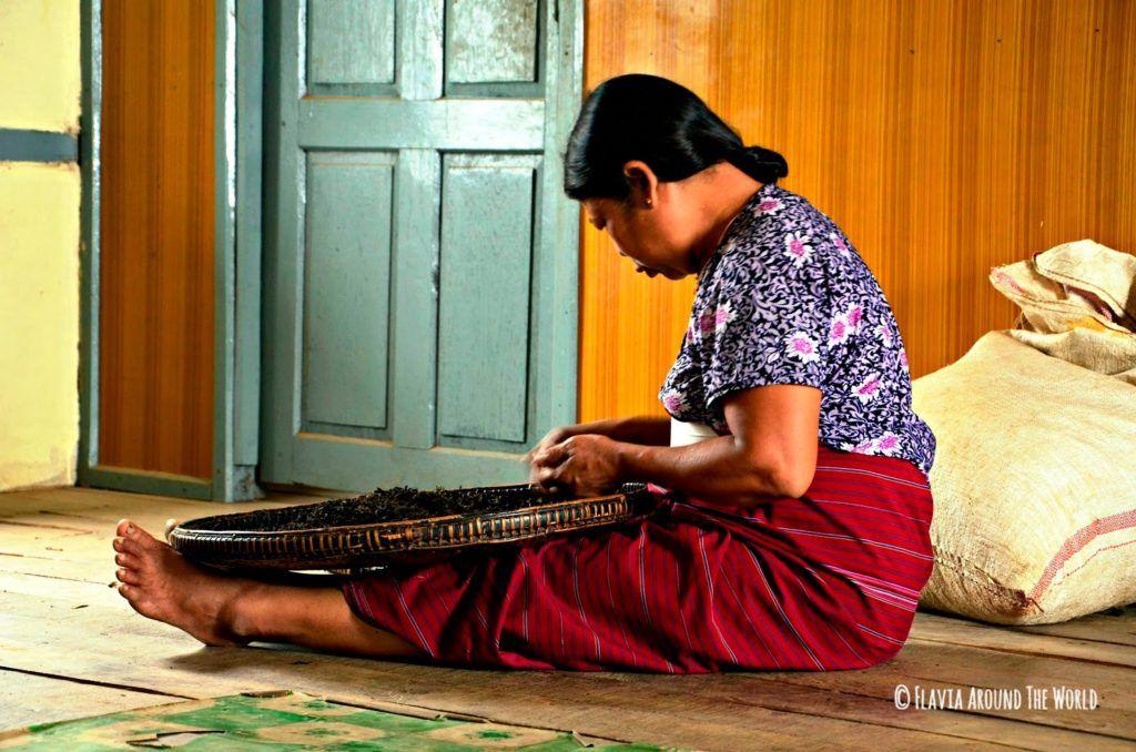 Mujer de la tribu Palaung cribando el te en Myanmar