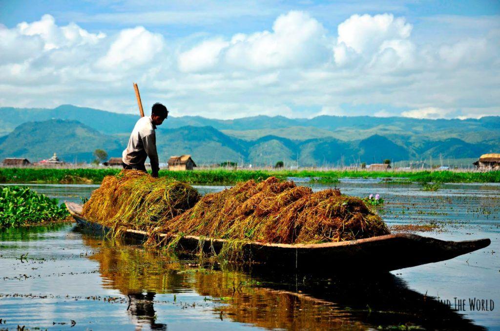 Pescador recogiendo plantas en el Lago Inle