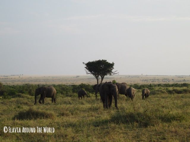 Elefantes en Masai Mara