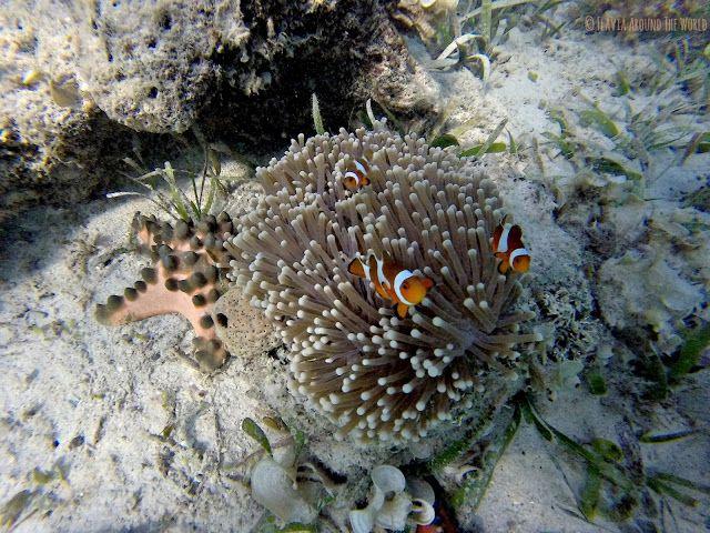 Nemos en las profundidades de las 17 islas, Riung, Flores