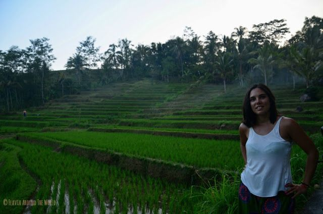 Campos arroz Ubud