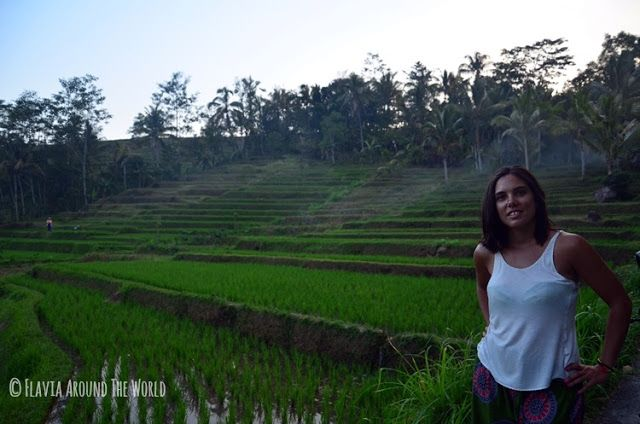 Jatiluwih terrazas arroz bali