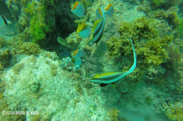 barrera de coral anakao madagascar